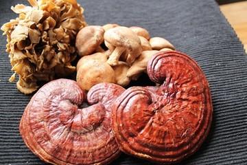 Vitální houby - poklad z přírody