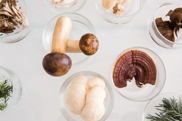 Vitální houby v klinických studiích